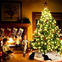 Your Toddler And Your Tree