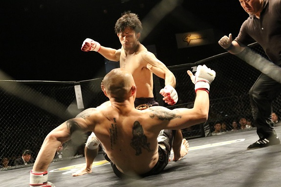 mixed martial arts, sport, ring, fighting, mma, cage, ultimate fighting championship